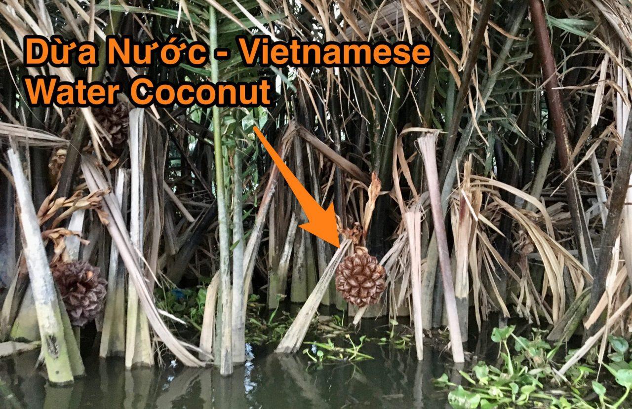 Dừa Nước - Vietnamese Water Coconut