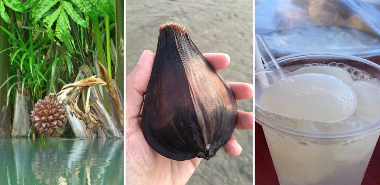 Vietnamese water coconut - Dừa Nước